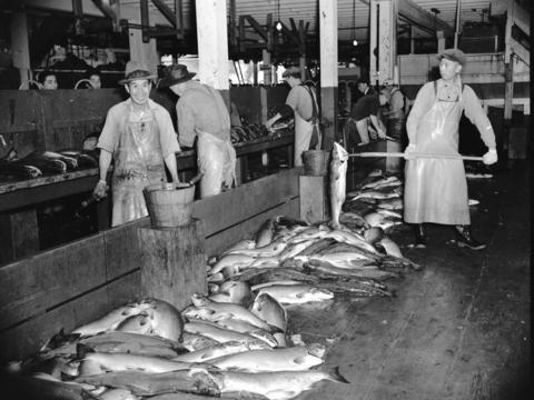CVA-586-700-Chinese Workers processing salmon-1941